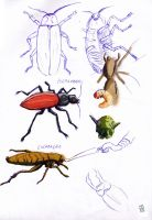 sketches of bugs by deinoscaos