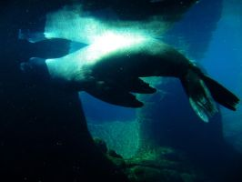 Sea Lion 1 -- Sept 2009 by pricecw-stock