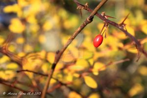 The last colors of november. 3 by MarinaPalme