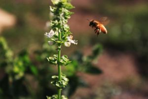 Working Bee by delsando