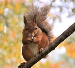 squirrel by Mazki
