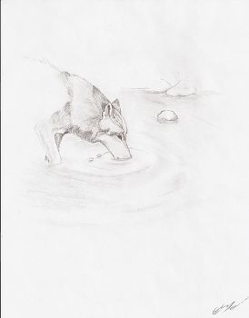 Wolf among the waters by Soaryu