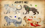 Feline Adopts: OPEN by Thecopperbeast