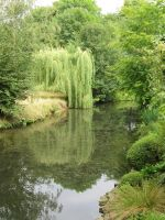 Weeping Willow by combray