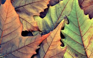 Leaves on the Ground by eyefish