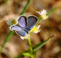Delicate Blue by natureguy