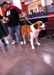 SKC Dog Show 2007: VII by whitelouis