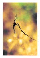 water color dragonfly by sergiemag
