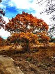 Fall Colors  by TheGerm84