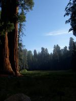 Sequoia by Xsen7X