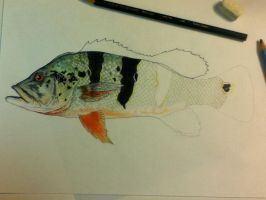 Peacock Bass .03 by scientificartist