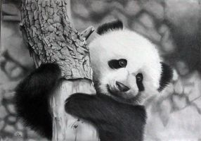Cute Panda by donchild