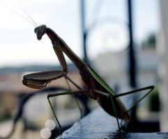 Mantis Silhouette by WoodenOx
