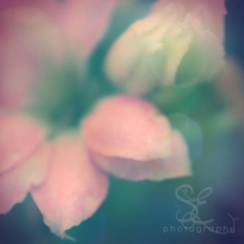 .crystal fragility. by multicolorlips