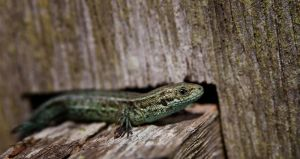 Not a Gecko by CharmingPhotography