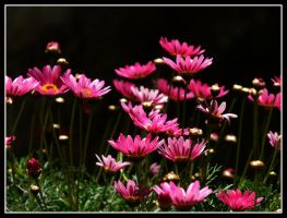 Spring in my Garden by kanes