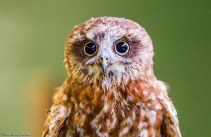 Scottish Owl Centre 28 by fatgordon0