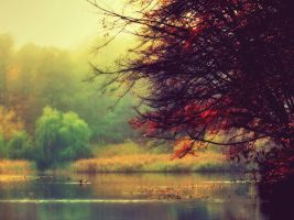 Colors of Autumn... by vsurovyi