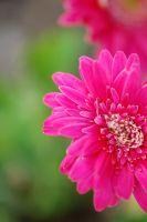 090 bright pink by J-BRM