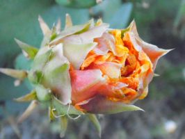 Cactus Bloom by TheGerm84