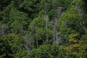 Zomg Dead Trees by FoxMcCarther