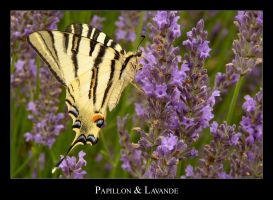 Lavender and butterfly by lasaucisse