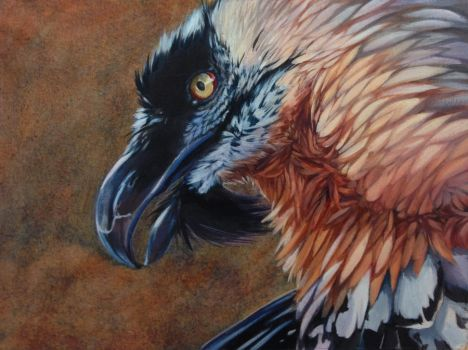 Bearded Vulture by Blackpassion777