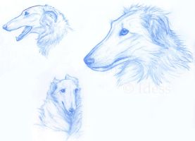 Borzoi Sketches by Idess