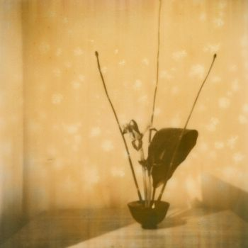 Ikebana with Cherry Blossoms by overdebated