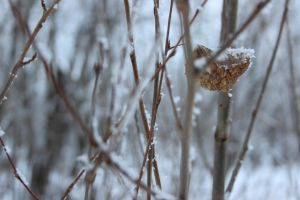 winter trees 4 by FreedomeSoul88