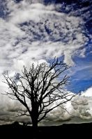 Dumfries: tree ghost+sky by Coigach