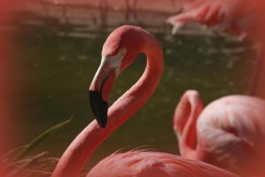 Flamingo Stare by creativemikey