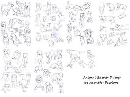 Animal Sketch Dump by aconite-pawlove