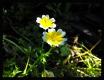 White n Yellow Flora by LetsAllBeNuerotic