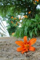 Lily Path by KaturahTRS