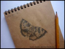 Butterfly sketch by laito-laetus