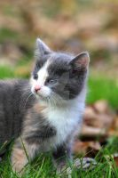 On the Level of a Kitten by jmhamilton
