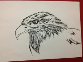 Eagle by maddy39