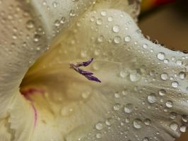 after the rain 6 by InayatShah