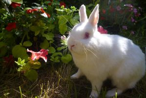 Miffy the bunny by Candyfloss-Unicorn