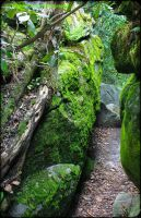 The Path Not Taken by GlassHouse-1