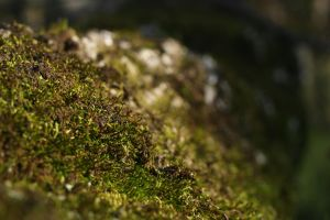 Moss by Wfate