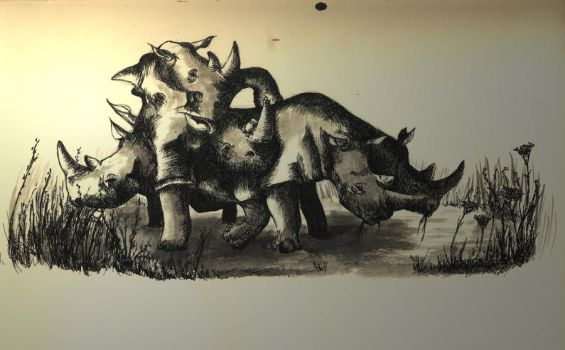Rhinos by NaughtyPic