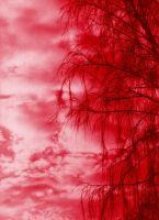 Branches - red edition by Medniex