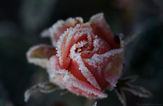 Cold and sweet by Samantha-meglioli