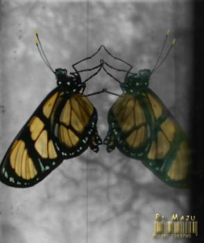 Yelow Butterfly by MaJuSaBe