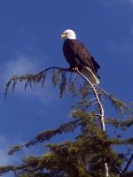 Eagle I by Photos-By-Michelle