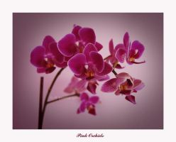 Pink Orchids. by she-sins