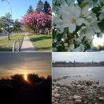 Calgary Collage by 07SABII22