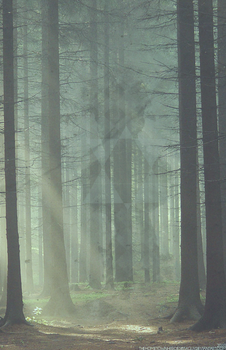 Forest by bsxguy